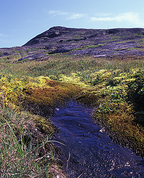 Special Places in Canada: The Tundra